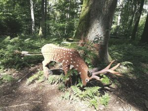 3d archery crossbow target set up in the woods with arrows in it