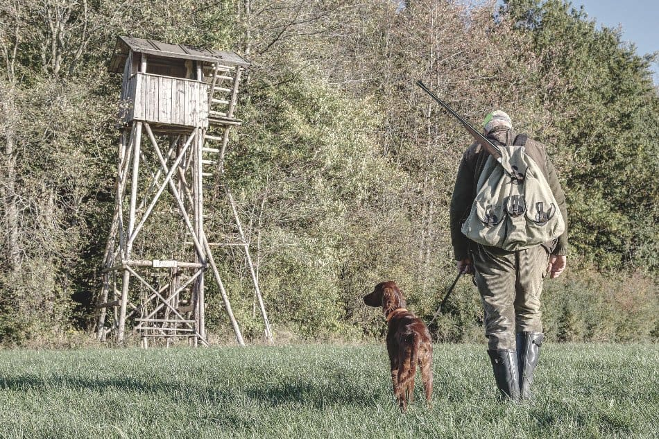 hunter with rifle and hunting dog walking towards high seat hunting platform in outdoors