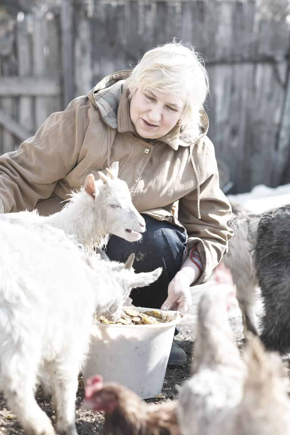 woman feeding livestock at home
