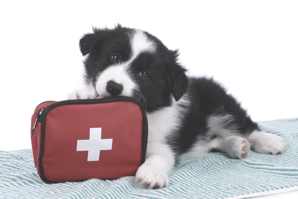 small puppy lying on ground with first aid kit