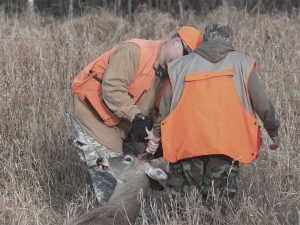two crossbow hunters moving a deer after killing it